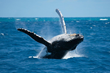 El Cid Marinas Whale Watching Tours