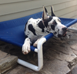 USA Made Raised Pet Cot
