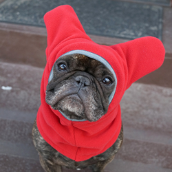 Snorf Industries' BatHat™ Sport, adorable ear protection for French Bulldogs