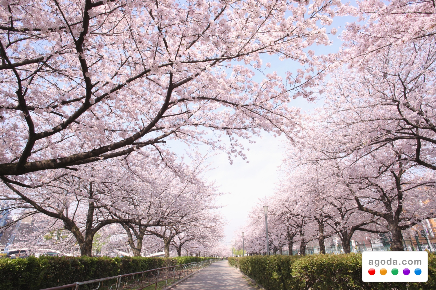 agodacom readies accommodation specials for japan�s