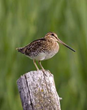 Naturalist Journeys Announces New Birding and Nature Tour Highlighting...
