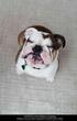 Huge Pet Friendly Carpet Improvements By Manufacturers