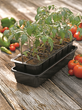 Place seedlings in their own clean container filled with moist sterile potting mix.