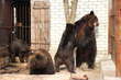 Ukraine--Soviet Era Bears Experience Paw-Freedom at Last! Lawrence...
