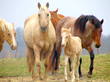 The Ranch Treatment Center Introduces Equine-Enriched Programming for...