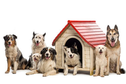 Pet House Climate Control AC Installation