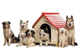 AirProMaster Announces Climate-Controlled Pet House Installation