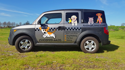 san ramon pet transportation