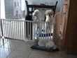 Indoor wide dog gate