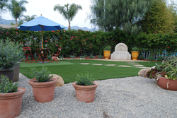 Eye of the Day|synthetic turf| Verdure, Paysage, drought eco friendly garden