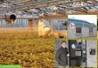 Biometric Access Ensures Security Compliance in Medical Marijuana...