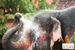 Agoda.com Gets Ready for Thailand's Songkran Festival with Superb...