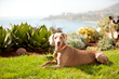 The Ritz-Carlton, Laguna Niguel Announces Dates for The Third Annual Diamond Ball and Yappy Hour Season Five