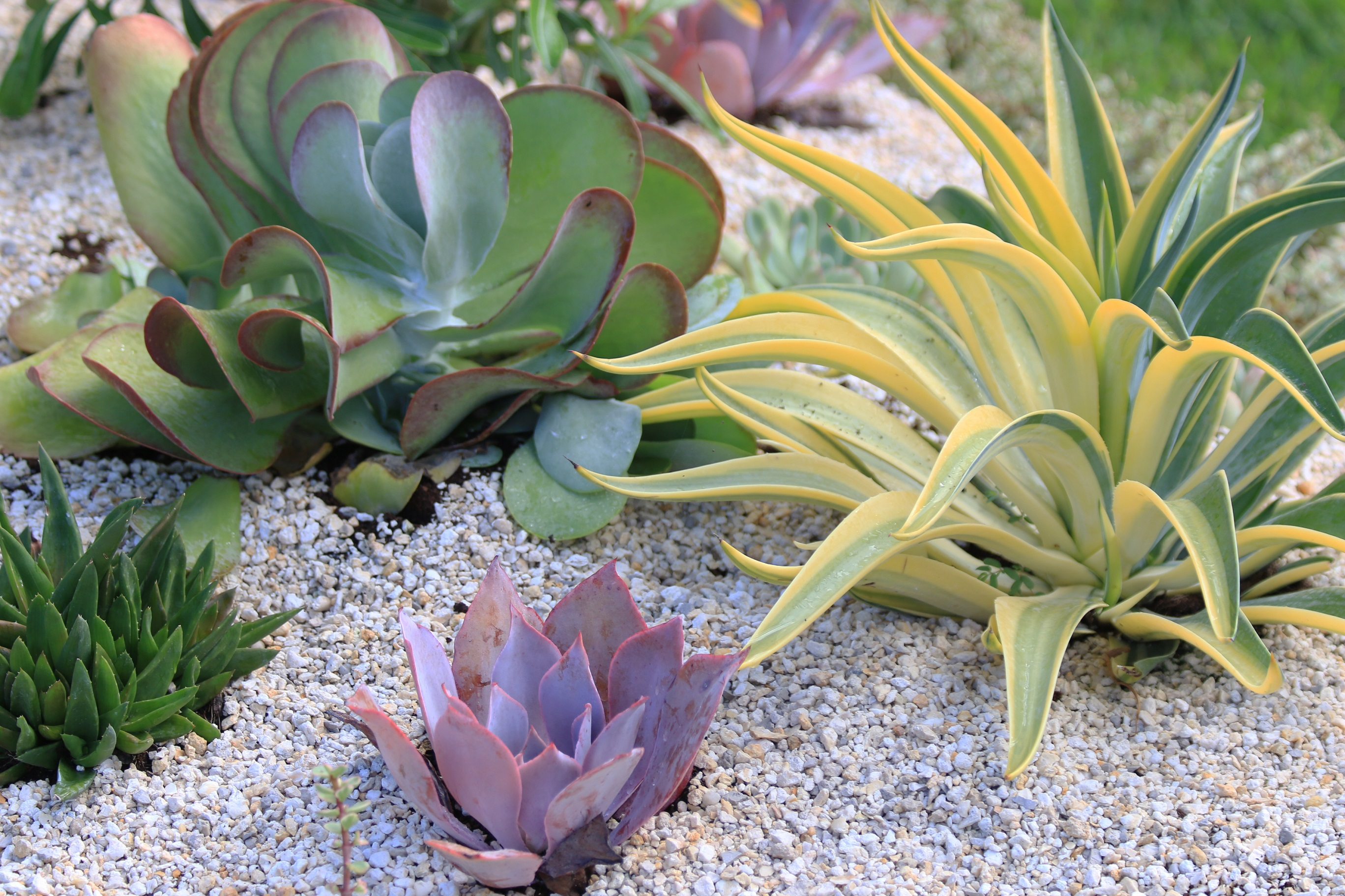 New desert escape plant collection from costa farms for Modern low maintenance plants