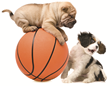 March Madness Pet Names Revealed