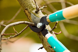 spring-pruning-skagit-county