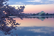 Capitol Hill Hotel Celebrates the National Cherry Blossom Festival...