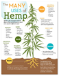 The Many Uses of Hemp infographic from Canada Hemp Foods