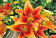Garden Media Group Premieres New Vibrant Garden Plants & Products...