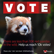 Rock the Vote for the Cute Red Panda to Help Endangered Species