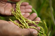 Mercy Corps Applauds Congressional Action to Champion Global Food...