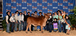 Red and Gray Brahman Cattle Champions Announced by Moreno Ranches at International Brahman Show and Sale in Houston, Texas