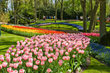 A World of Flowers Is Blooming; Viator Announces Flowering Tulip and Cherry Blossom Travel Experiences