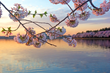 The Graham Georgetown Celebrates the National Cherry Blossom Festival