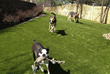 Dog runs featuring K9Grass are unique additions to outdoor living areas