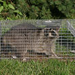 ase the most effective Havahart traps, repellents, and electronic solutions for that particular critter.