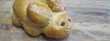 House of Bread Bakery Café is Introducing Hunny Bunnies to Hop...