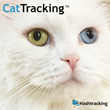 Satisfy Your Curiosity With CatTracking by Hashtracking