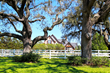 50 planted live oak trees, irrigated — surrounding perimeter of property