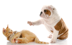 Fighting like cats and dogs Veterinary VA