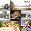 Epica™ Medical Innovations Selects Henry Schein Animal Health as Exclusive Distributor of its Vimago™ Veterinary CT Scanner and  Artemis™ Regenerative Therapy Device