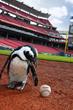 Cincinnati Reds, Newport Aquarium team up for 2015