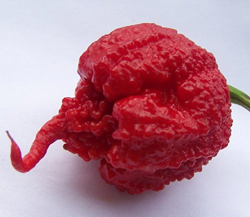 carolina reaper no longer hottest pepper