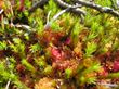 peat moss, peatlands restoration, social responsibility, environment, sustainable practices