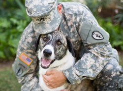 Military Pet of the Year and Dogs on Deployment Mascot, Leonidas, is protected by Pets Best