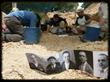 ARMH excavation in Spain
