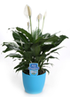peace lily, earth day, costa farms