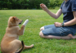 """Dallas-based Park Cities Pet Sitter to Offer """"Training and Enrichment""""..."""