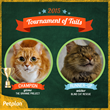 32 Winners, One Champion in 2015 Petplan Tournament of Tails