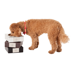 Stylish Dog Bowl