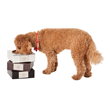 Pets Dine in Style with LazyBonezz New Chic (and Durable) Pet Bowls...