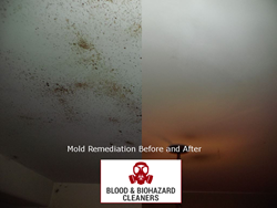 Mold remediation service before and after