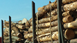 Forest2Market Launches Wood Fiber Supply Chain Optimization System