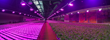 SparkFund Partners with LumiGrow to Offer Payment Plans for Horticultural Lighting Systems