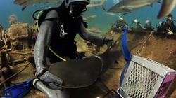 Stuart Cove's Dive Bahamas Shark Rescue