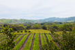 Three Paso Robles Wineries Named In The Top 50 101 Best Wineries In...